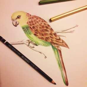 @palmita.ilustracion