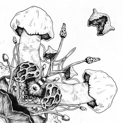 ashwhittakerillustration 5